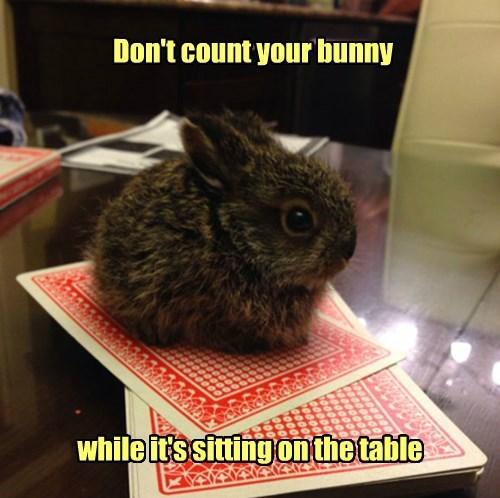 pun cards bunny - 8451343872