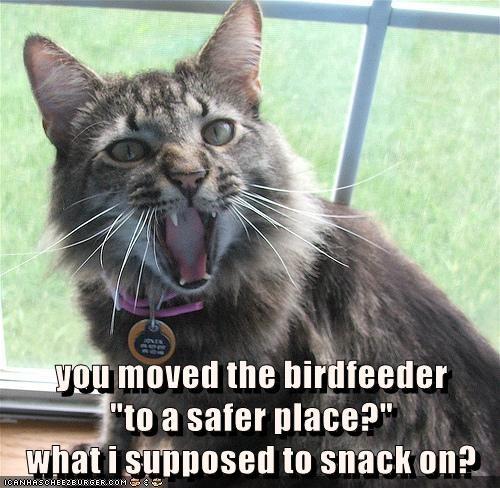 animals cat snack caption birdfeeder - 8451368704