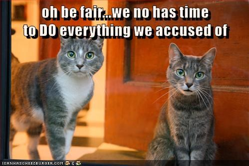 accused,innocent,fair,Cats