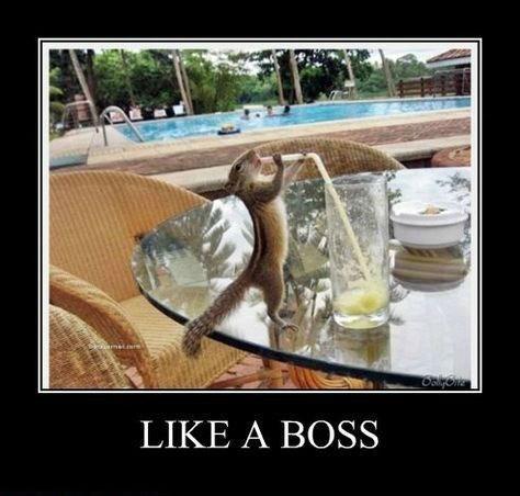 Like a Boss chimpunk funny rad - 8451377408