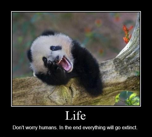 life panda extinct funny - 8451377920