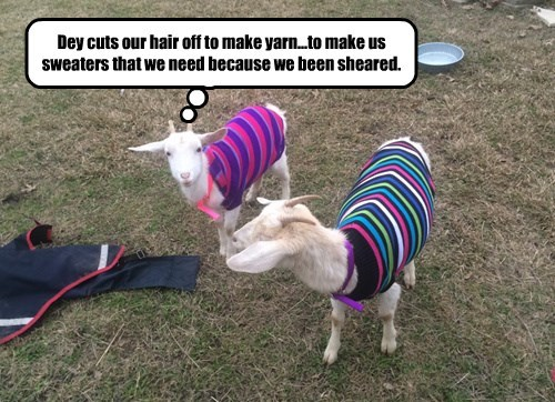 goat sweater confused - 8451475200