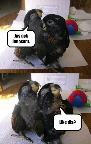 innocent smile parrot - 8451475968