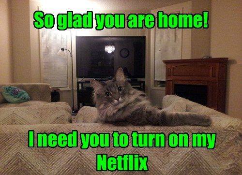 So glad you are home! I need you to turn on my Netflix