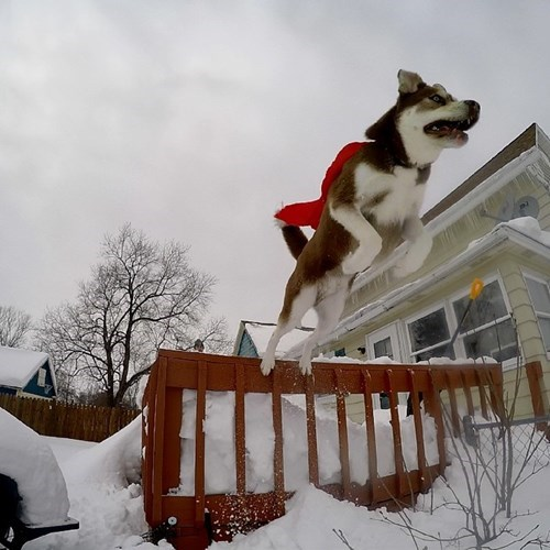 dogs snow husky superdog landscape
