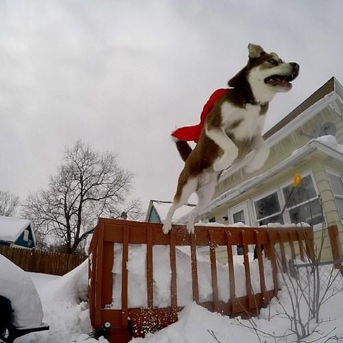 dogs snow husky superdog landscape - 8451537664