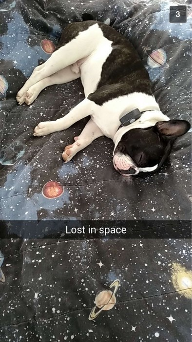 dogs,snapchat,boston terrier,sleeping,lost,space