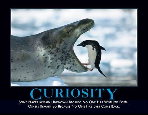 curiosity funny seal penugin