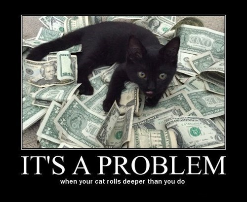 Cats,cute,money,funny