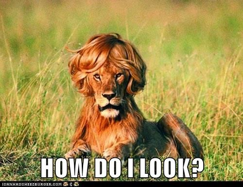 animals lions captions funny - 8451709696