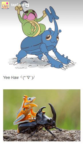 heracross Pokémon politoed - 8451780352