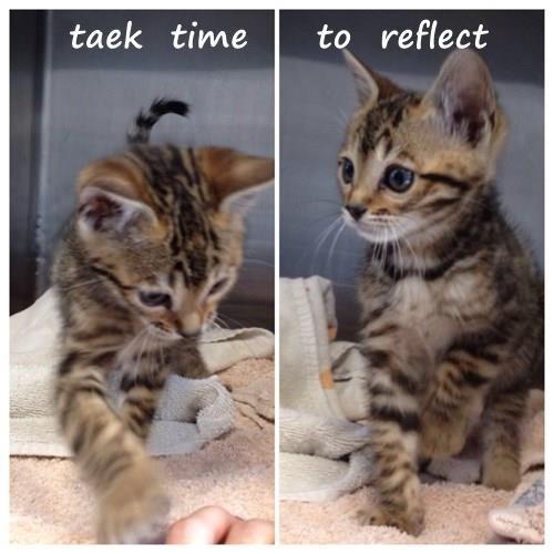 taek  time     to  reflect