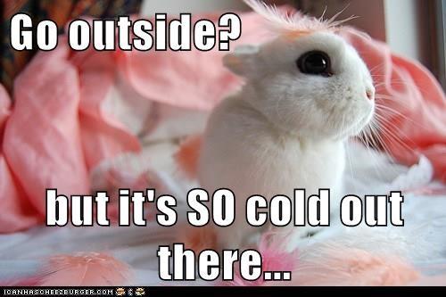 animals cute captions bunny - 8452034304