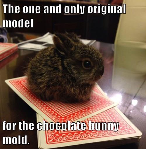 cute,captions,bunny