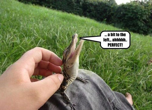 alligator captions cute - 8452125696