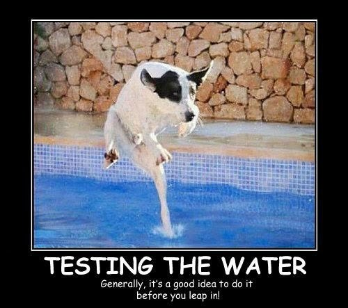 dogs fear water funny