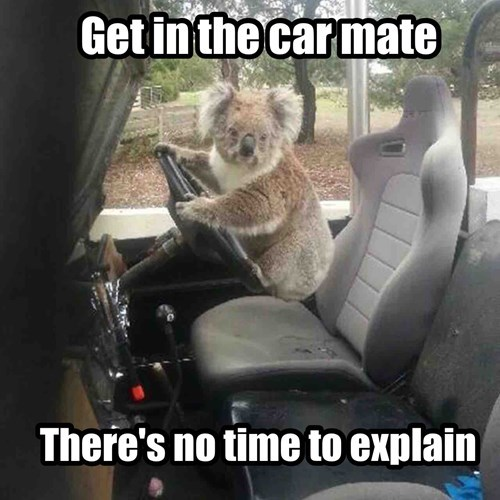 drive,get in the car,no time to explain,koala