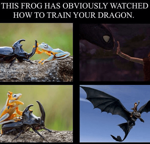 cartoon memes how to train your dragon irl frog
