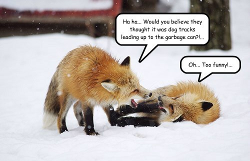 foxes captions funny - 8452404480