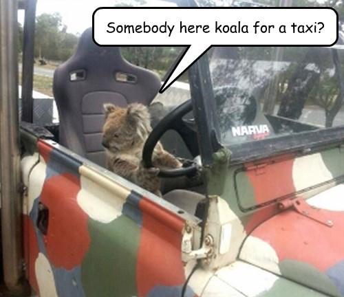 pun taxi koala - 8452461312