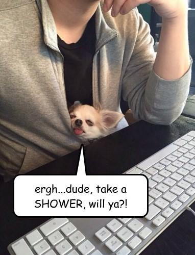 dogs,smell,shower,captions