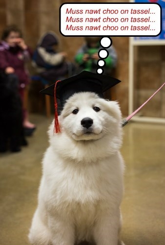 dogs,chew,hat,tassel
