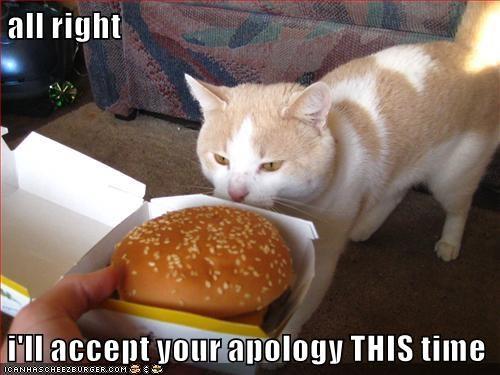 animals cat apology caption accept - 8452544000