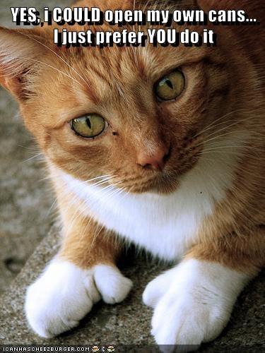 animals tabby thumbs Cats - 8452546304