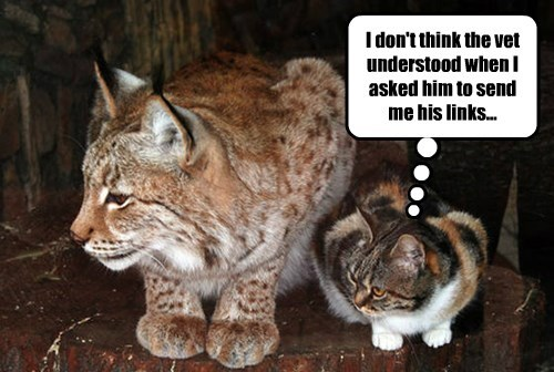 captions Cats lynx funny - 8452556032