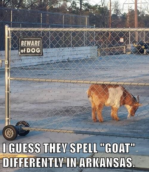 animals captions goats funny - 8452565504