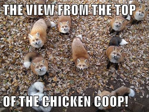animals fox captions cute - 8452568576