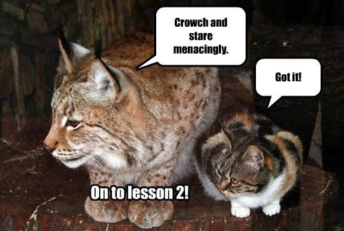 captions Cats funny - 8452687872