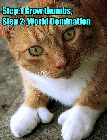 tabby,world domination,thumbs,Cats