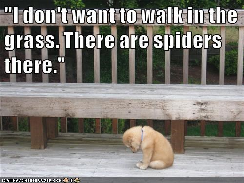 """I don't want to walk in the grass. There are spiders there."""