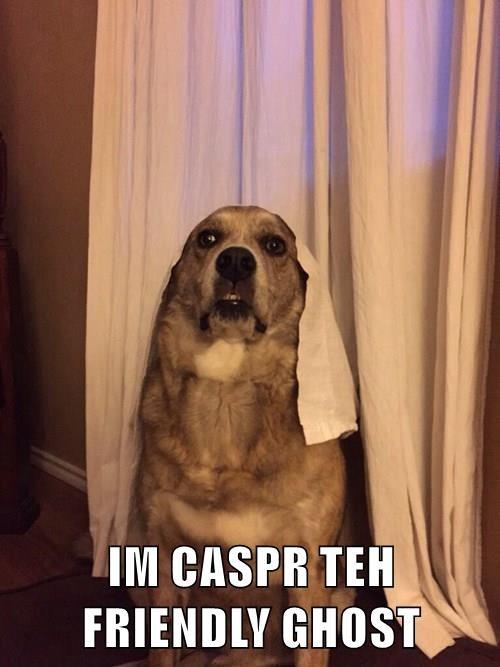 animals costume dogs casper golden retriever - 8452702208