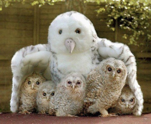 cute baby animals owls and stuffed owl