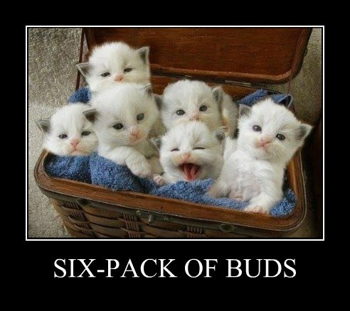 Cats,buds,kitten,puns