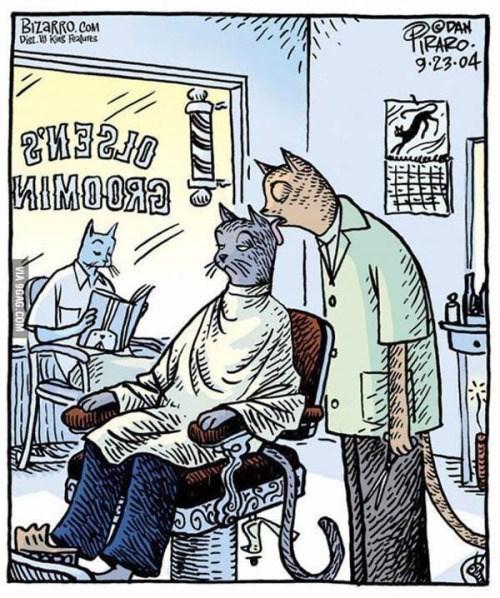 Los gatos si saben
