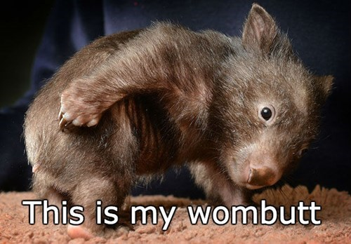butt Wombat squee - 8452902656