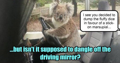 captions koala funny - 8453002240