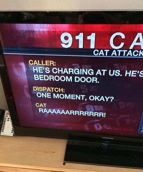 funny-fail-pics-911-call-cat