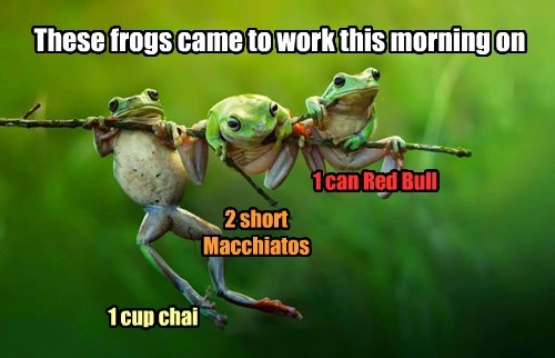 caffeine morning coffee frogs - 8453080576