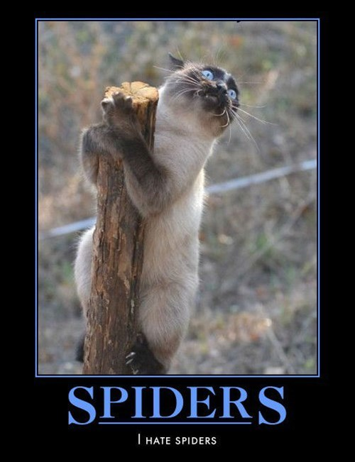 hate spider Cats funny - 8453128704