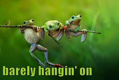 animals captions funny frogs - 8453317888