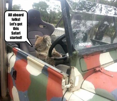 captions koala funny - 8453323264