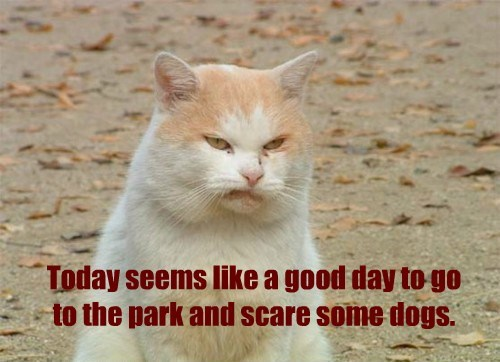 hump day scare grumpy Cats - 8453389312