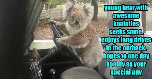 puns,koala,dating