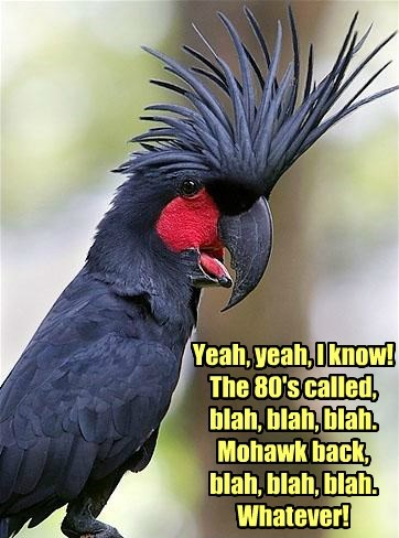 punk,birds,mohawk