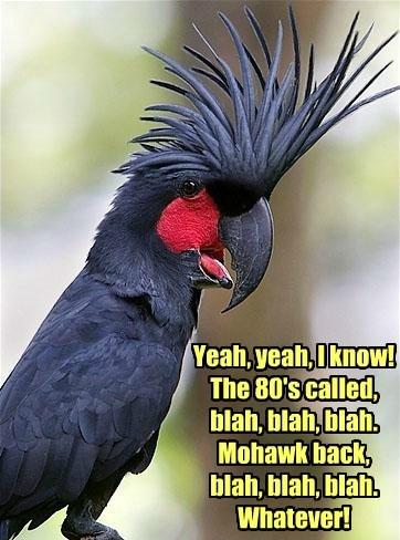 punk birds mohawk - 8453440000