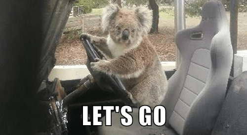 animals captions koala funny - 8453506816